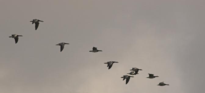 Schrijven over de grens – literatuur en migratie, een introductie